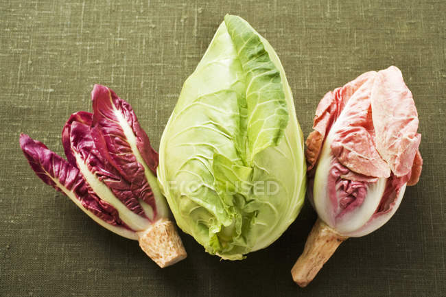 Pointed cabbage and radicchio — Stock Photo