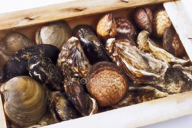 Closeup view of different kinds of shellfish in crate — Stock Photo
