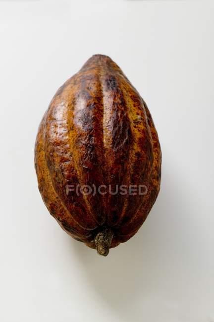 Vaina de cacao crudo - foto de stock