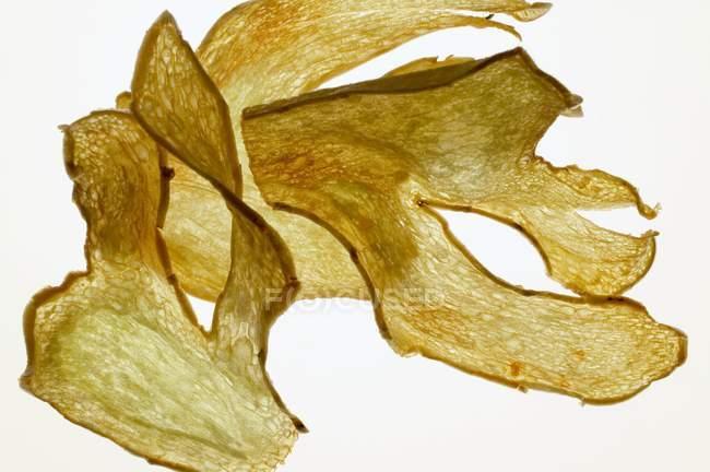 Fette di zenzero fritte — Foto stock