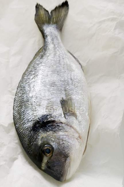 Fresh sea bream — Stock Photo