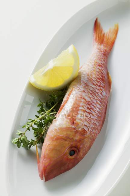 Fresh red mullet — Stock Photo
