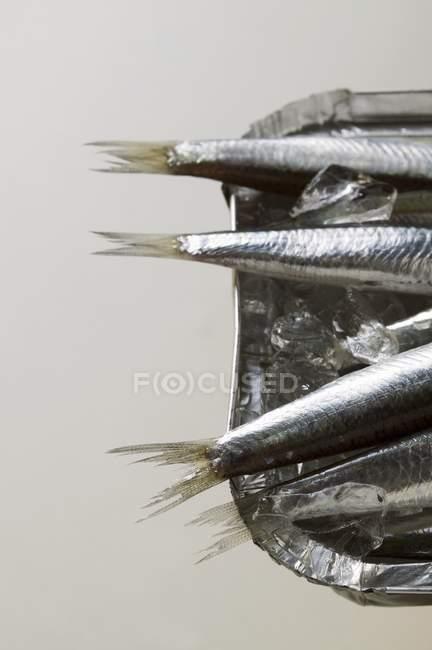Anchoas en plato de aluminio - foto de stock