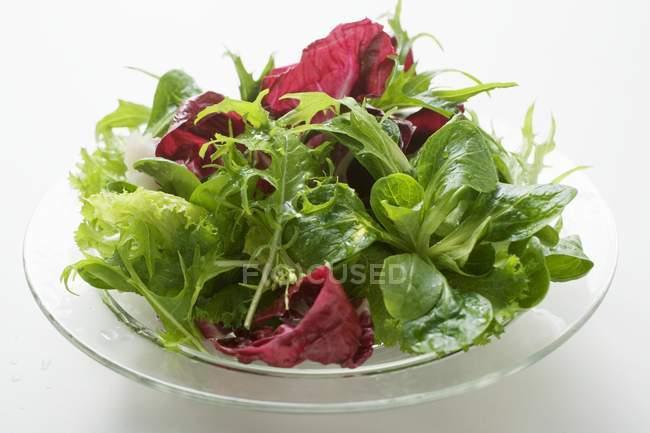 Foglie di insalata mista — Foto stock