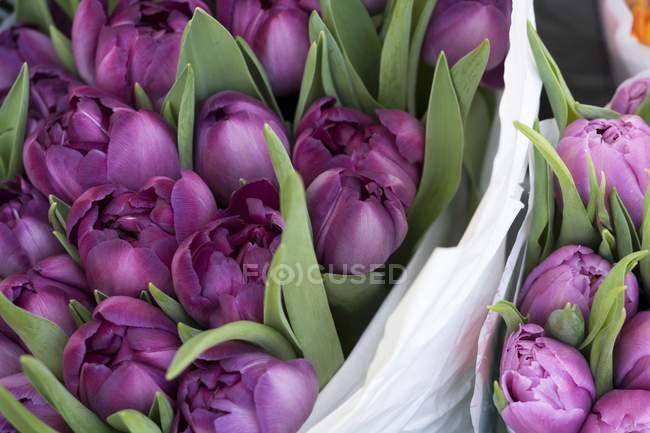 Closeup vista de tulipas roxas com folhas em buquês — Fotografia de Stock