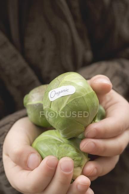 Fille aux choux de Bruxelles bio — Photo de stock