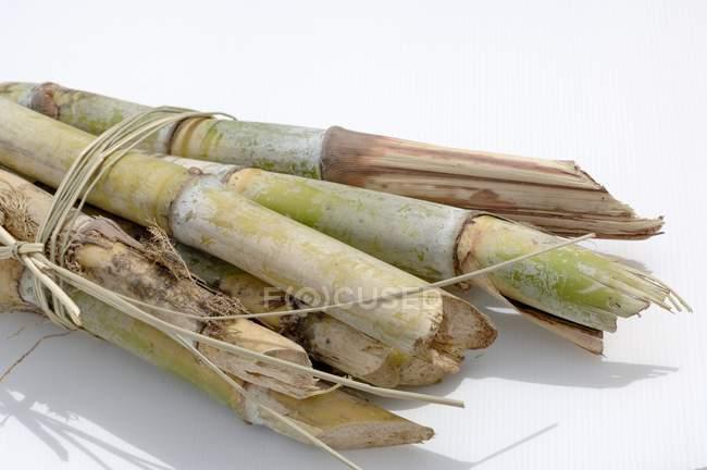 Closeup vista empacotada de cana de açúcar na superfície branca — Fotografia de Stock