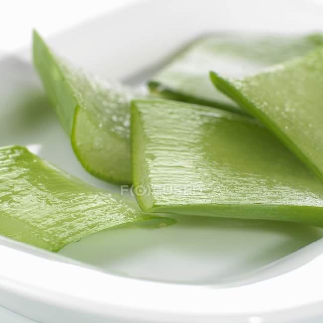 Blätter der Aloe Vera — Stockfoto