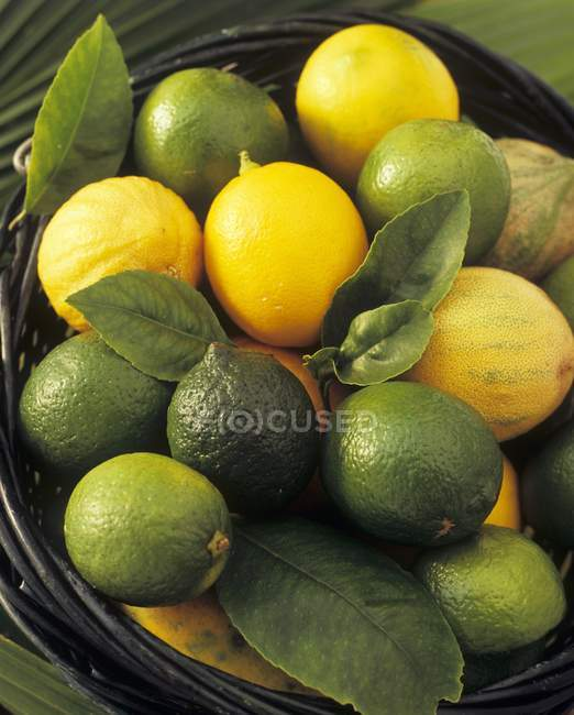 Limes and lemons with leaves — Stock Photo
