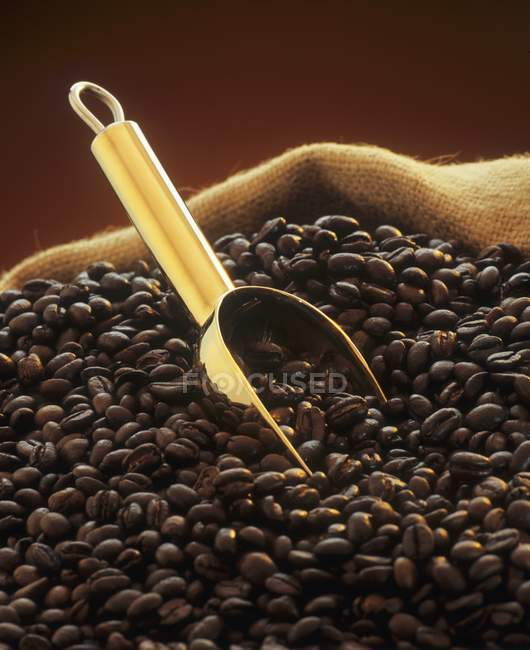 Roasted coffee beans with golden scoop — Stock Photo