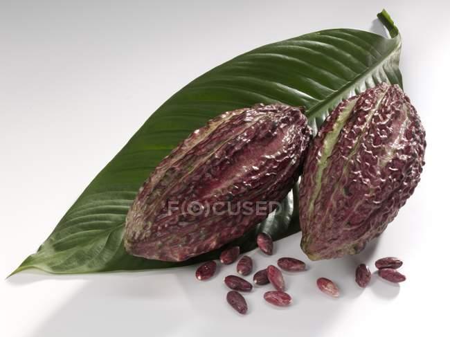 Frutas de cacao con hojas - foto de stock