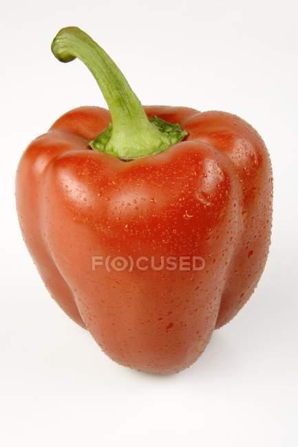 Peperoncino rosso — Foto stock