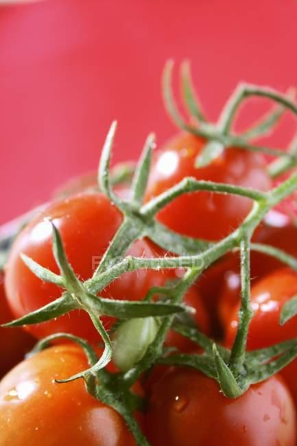 Свіжі дозріли помідори-чері — стокове фото