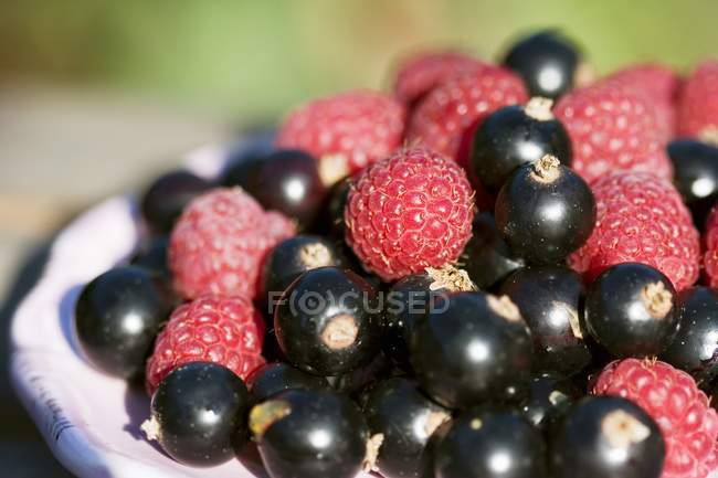 Fresh picked raspberries and blackcurrants — Stock Photo