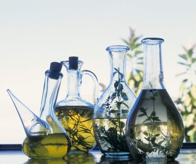 Vue rapprochée de diverses huiles à base de plantes dans des bouteilles en verre — Photo de stock