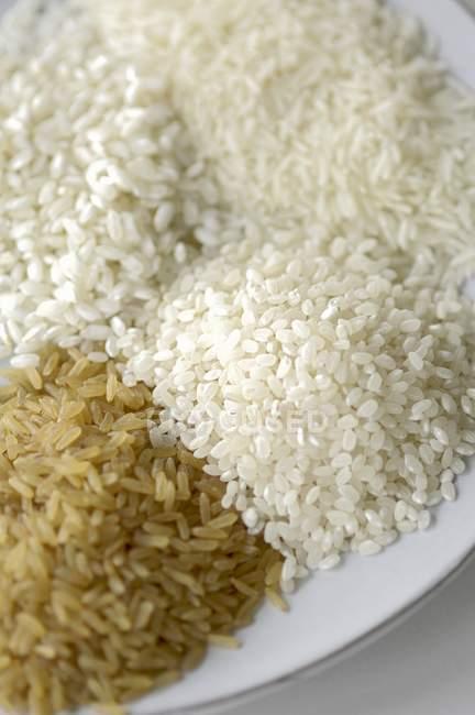 Verschiedene Reissorten — Stockfoto