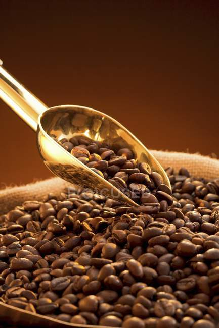 Coffee beans in sack with golden scoop — Stock Photo