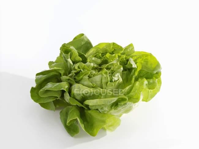 Свіжої зелені салату — стокове фото