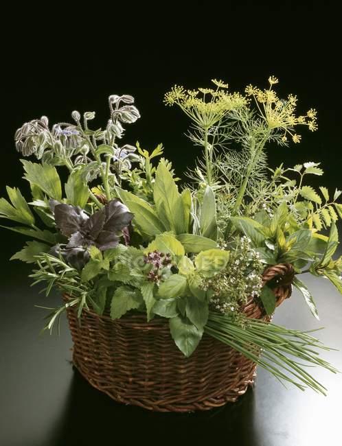 Vista de cerca de hierbas culinarias frescas en una canasta - foto de stock