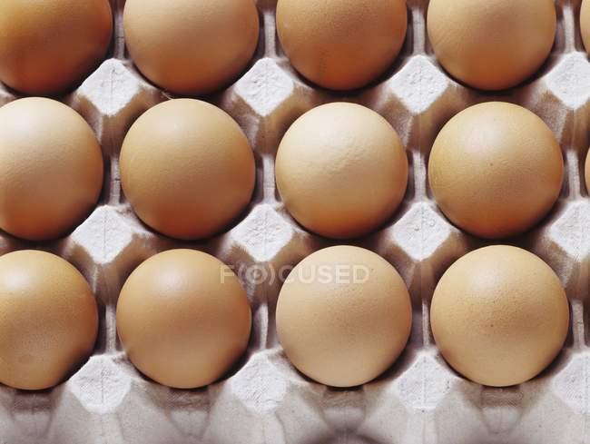 Яйца в лоток для яиц — стоковое фото