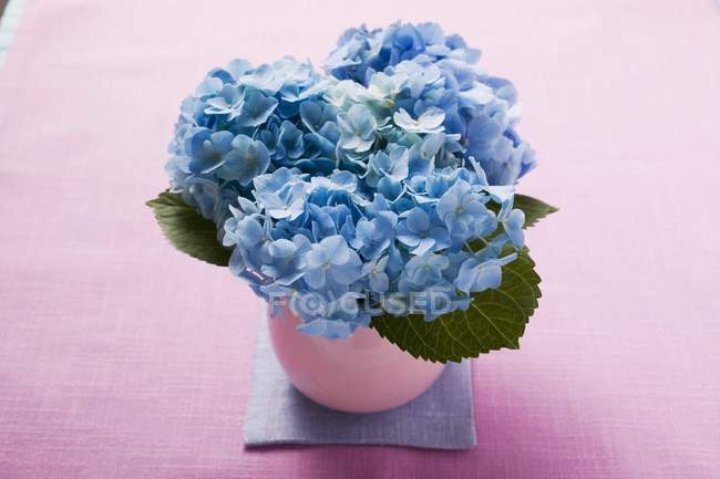 Elevated view of blue hydrangea flowers in vase — Stock Photo