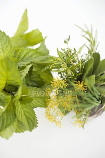Bouquet d'herbes et de menthe fraîche — Photo de stock