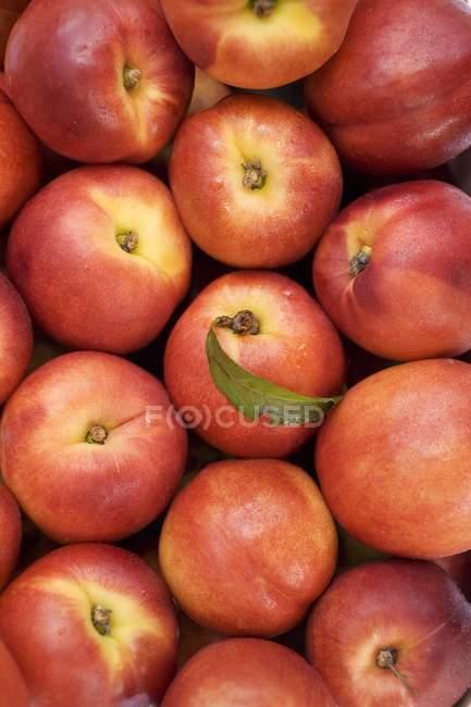 Fresh and ripe nectarines — Stock Photo