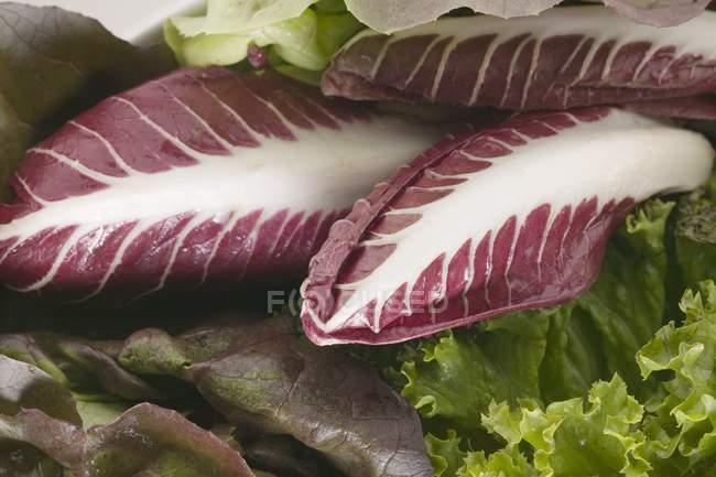 Selezione di lattughe e radicchio — Foto stock