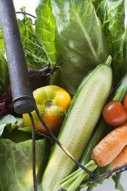 Fresh vegetables in basket — Stock Photo