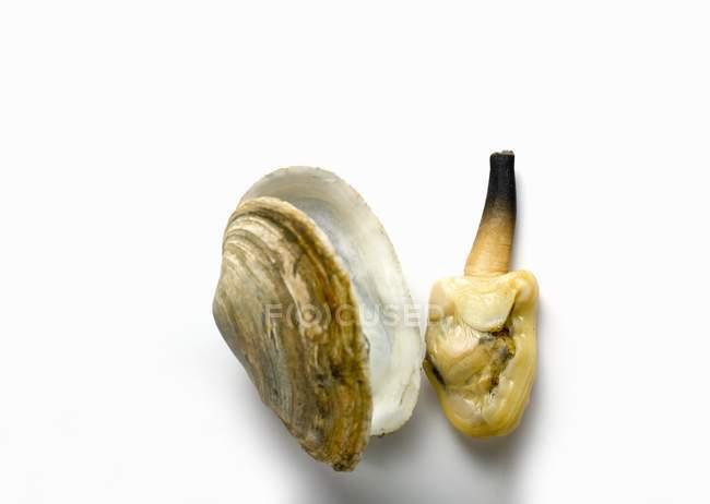 Primo piano vista dall'alto del clam al lato di shell su superficie bianca — Foto stock