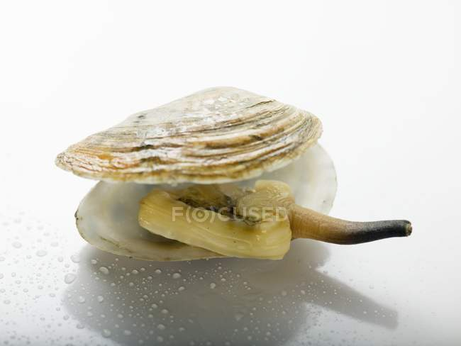 Vista del primo piano del mollusco cotto nella shell su superficie bianca — Foto stock