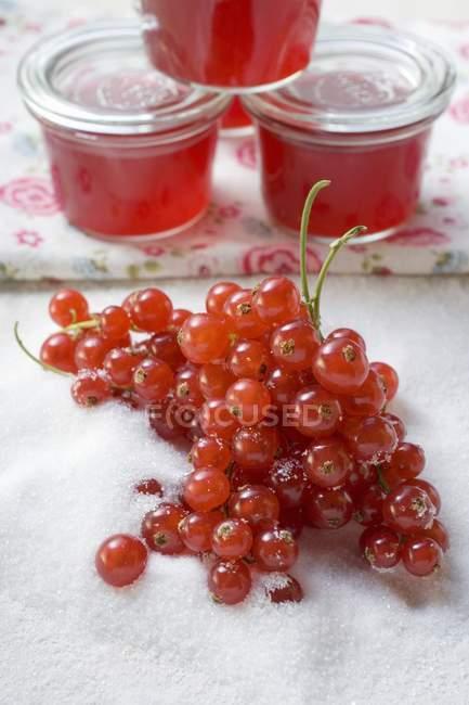 Reife rote Johannisbeeren in Zucker — Stockfoto