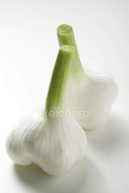 Свежий чеснок луковицы — стоковое фото