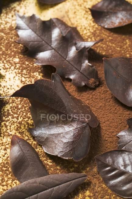 Несколько разных шоколадных листьев — стоковое фото