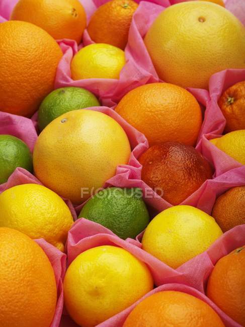 Assortment of citrus fruits — Stock Photo