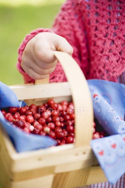 Enfant tenant des canneberges dans le panier — Photo de stock