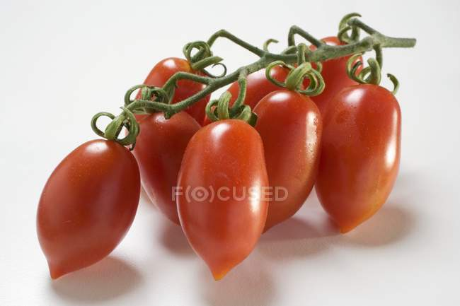 Fresh plum tomatoes — Stock Photo