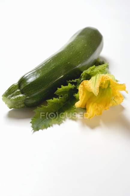 Зеленые кабачки с цветком и листьев — стоковое фото