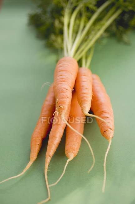 Zanahorias frescas maduras con tallos - foto de stock