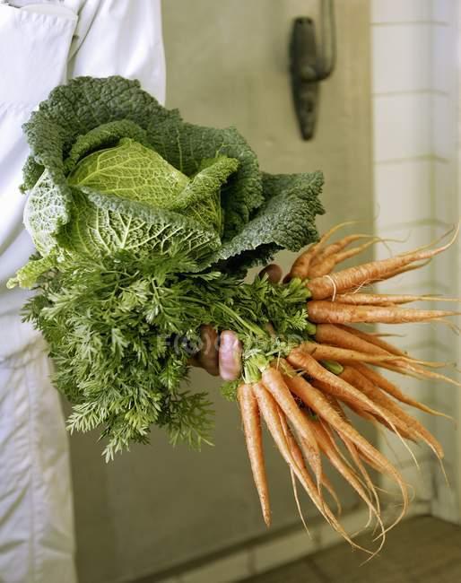 Tenue manuelle de carottes fraîches cueillies — Photo de stock