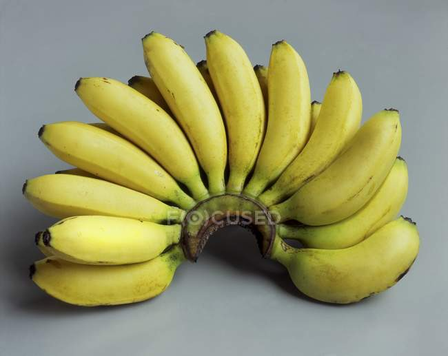 Bunch of small bananas — Stock Photo