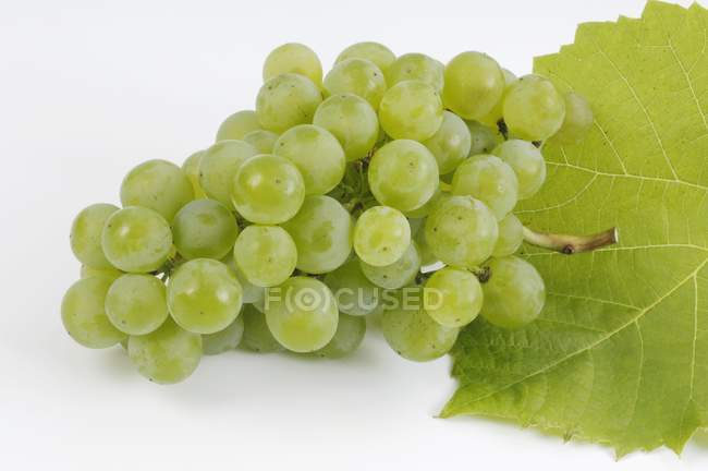 Bunch of green grape — Stock Photo