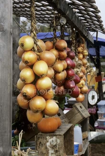Ассорти лук на открытом рынке — стоковое фото