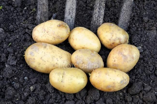 Frische Kartoffeln auf Boden — Stockfoto