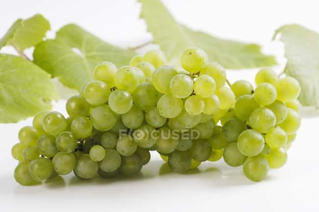Грона винограду зелений — стокове фото