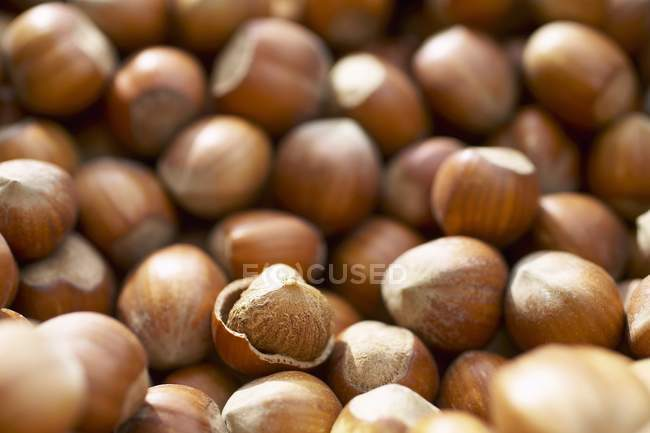 Hazelnuts, with and without shells — Stock Photo