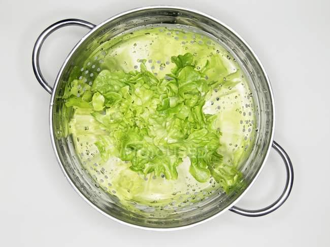 Свіжий салат листя — стокове фото