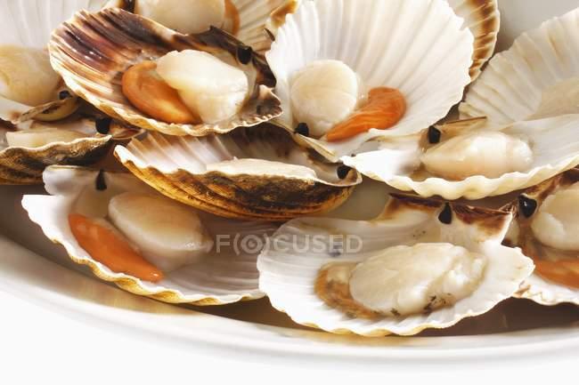 Primo piano vista di capesante aperte in piatto bianco — Foto stock
