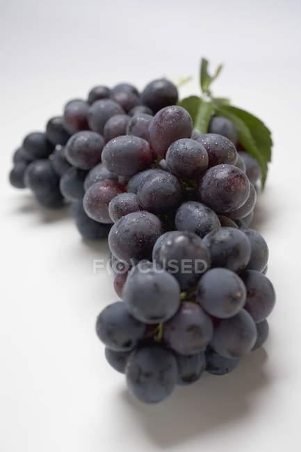 Букет з чорного винограду — стокове фото
