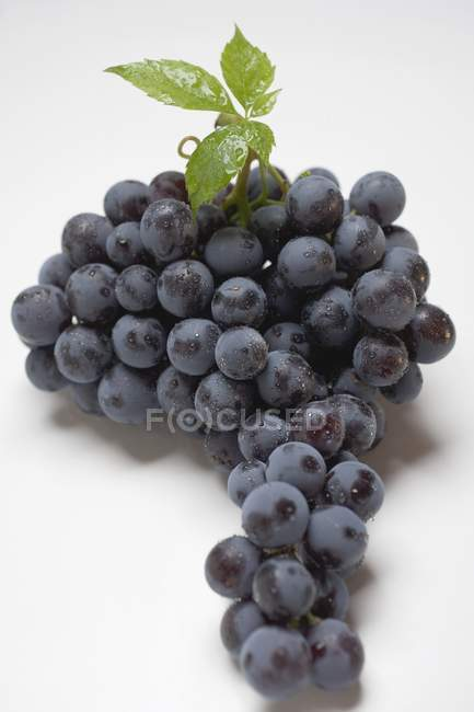 Bunch of black grape — Stock Photo